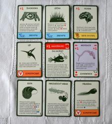 Evoluce-Cas-letat-karty