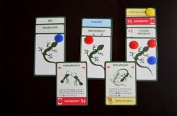 Evoluce-karty-krmení